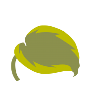 Hosta